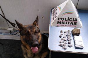 Manhuaçu:  Com ajuda do cão Aquiles, PM apreende 19 buchas de maconha