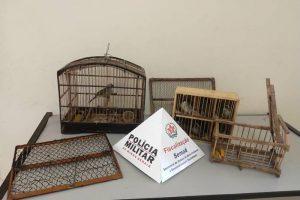 PM prende homens que capturavam pássaros em Alto Caparaó. Quase 100 mil reais de multa