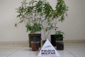 Maconha era cultivada em Santana do Manhuaçu