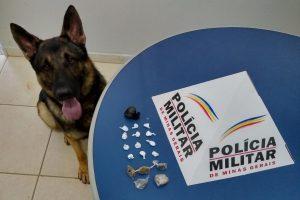 Manhuaçu: PM apreende entorpecentes com ajuda do cão Aquiles