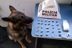Manhuaçu: Com apoio do cão farejador Aquiles PM apreende drogas