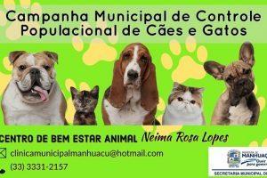 Prefeitura inicia esterilização de cães e gatos nesta quinta-feira