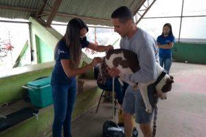 Vacinação contra raiva em cães e gatos inicia em Manhuaçu