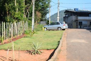 Moradores plantam árvores, grama e criam belo jardim no bairro São Vicente