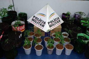 Planta maconha e vai preso em Manhuaçu