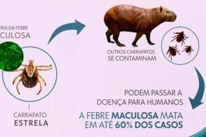 Saiba como prevenir-se da febre maculosa