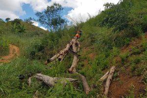Homem morre atingido por eucalipto na zona rural de Manhuaçu
