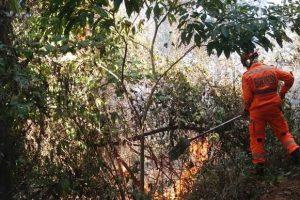 Bombeiros combatem incêndio florestal no bairro Petrina